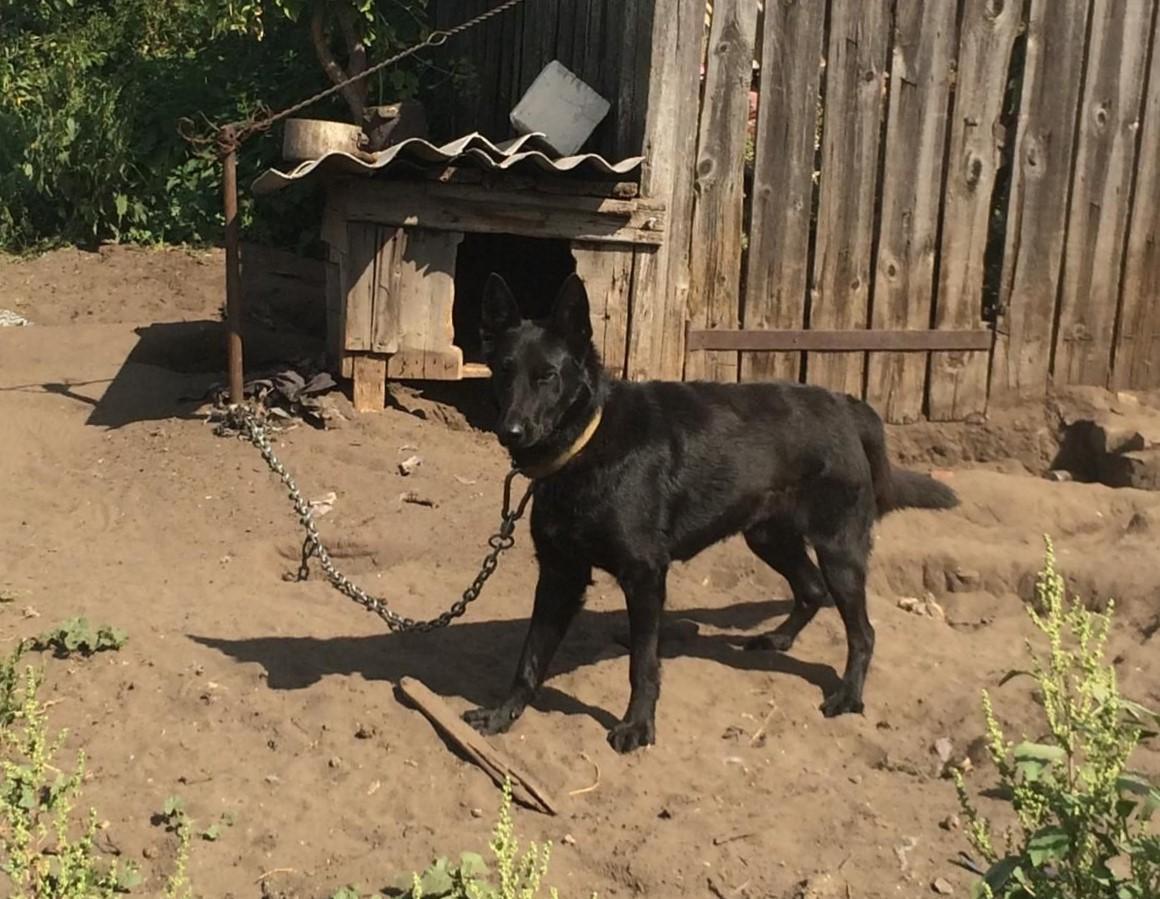 В Волгоградской области собака растерзала годовалого ребенка