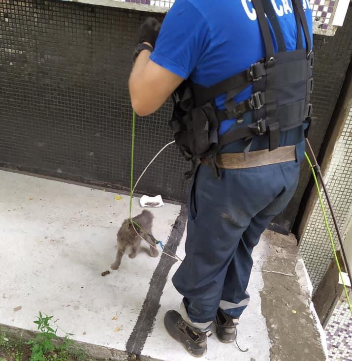 В Тольятти спасателям пришлось доставать кошку из температурного шва жилого дома   CityTraffic