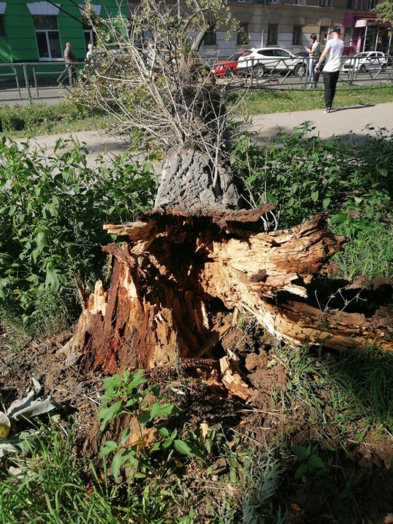 В Самаре дерево упало на проезжую часть и повредило автомобиль | CityTraffic