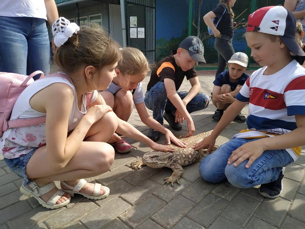 Жителей Самары приглашают потрогать тараканов, ящериц и змей | CityTraffic