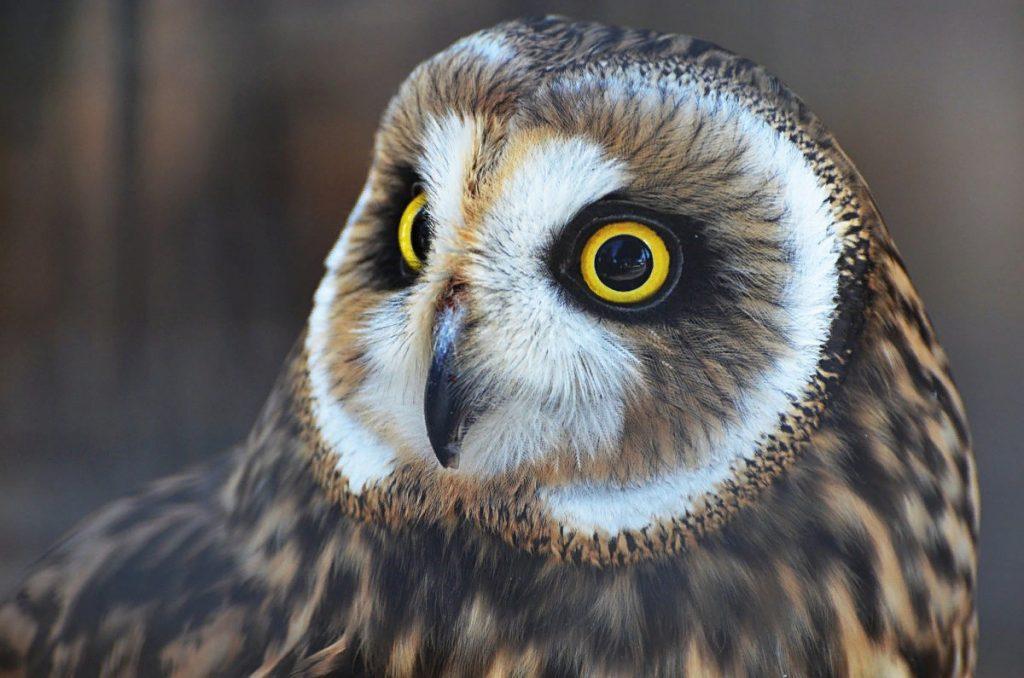 В Самарской области ветеринары ампутировали крыло сове, которая столкнулась с автомобилем | CityTraffic