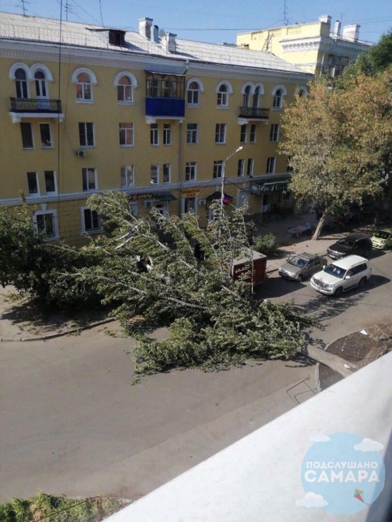 В Самаре поперек дороги упало огромное дерево, но его никто не торопится убирать | CityTraffic