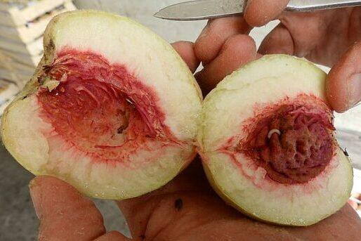 В аэропорту Самары уничтожили яблоки и нектарины, зараженные опасными вредителями | CityTraffic