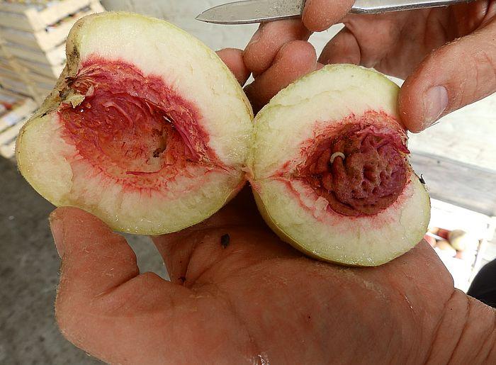 Житель Самары сломал зуб вишневой косточкой, когда ел сладкую слойку | CityTraffic