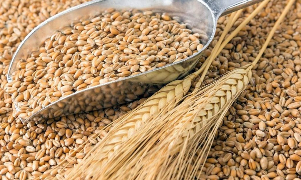 В Самарской области намолотили 1 млн тонн урожая зерна | CityTraffic