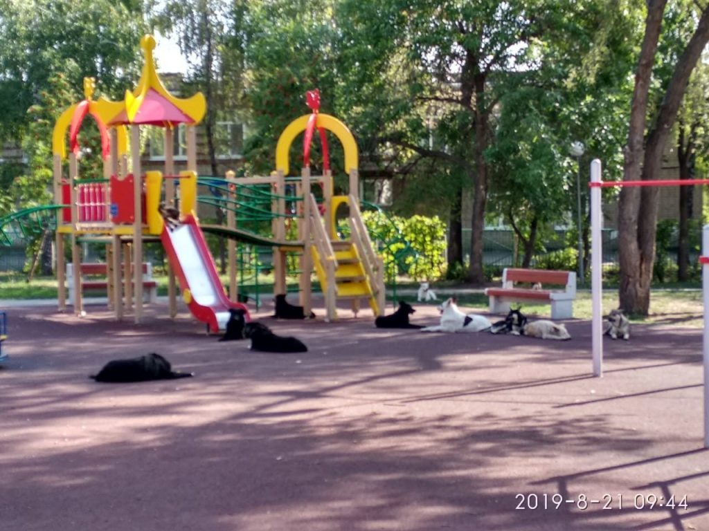 В Самаре стая бездомных псов, живущих на детской площадке, покусала ребёнка | CityTraffic