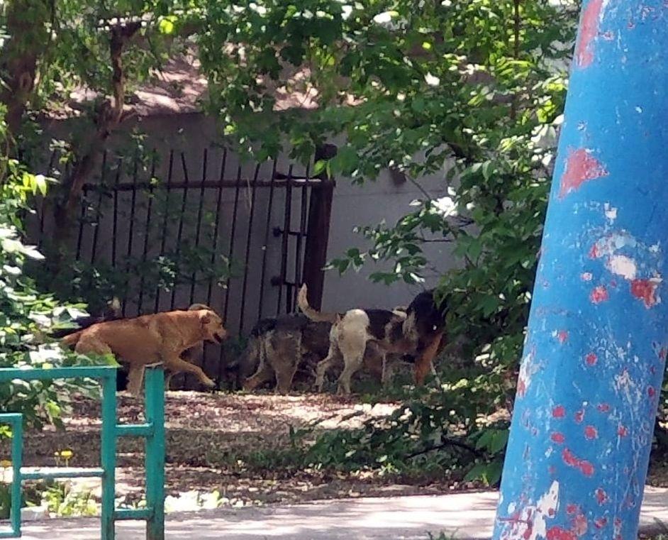 Жителей Самары терроризирует стая бродячих псов, живущих рядом со школой и детсадом | CityTraffic