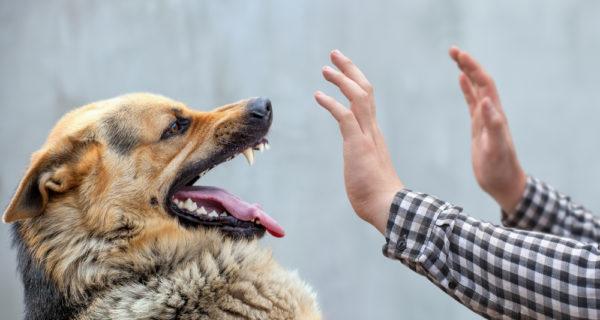 За 8 месяцев 2019 года более 7 тыс. жителей Самарской области были привиты от бешенства после укусов животных | CityTraffic