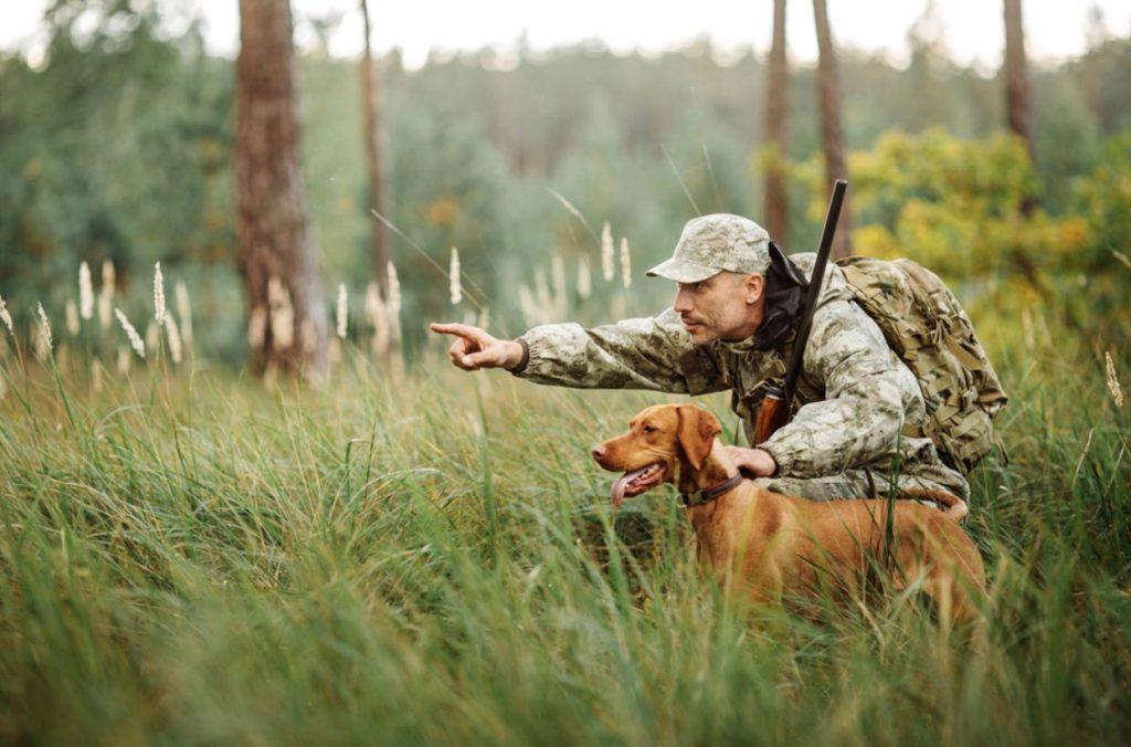 Охотники Самарской области подали почти 3 тысячи заявок на добычу косулей и лосей | CityTraffic