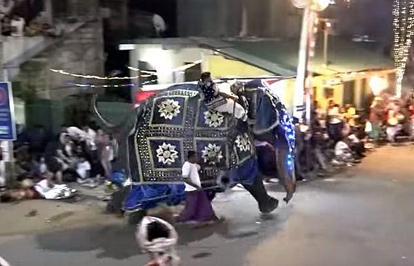 Два слона устроили массовую давку на параде, посвященном зубу Будды, ранив 17 человек: видео | CityTraffic