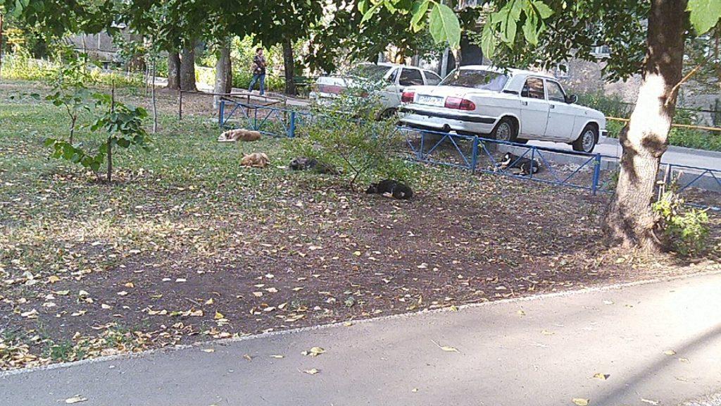 Жители Самары жалуются на растущие стаи бездомных собак | CityTraffic
