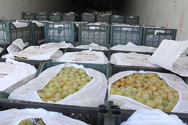 Таможенники развернули обратно в Казахстан фуру с 20 тоннами винограда, которые ехали в Самарскую область | CityTraffic