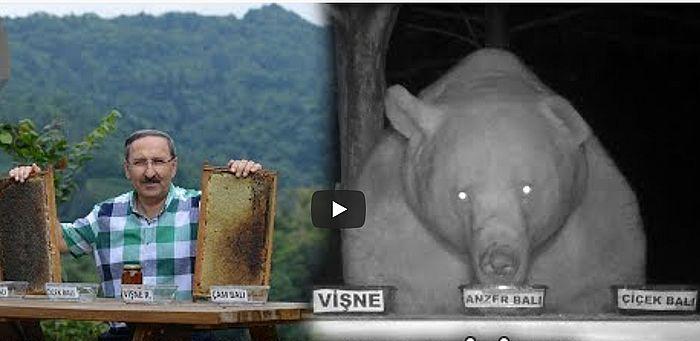 Пасечник придумал, как заставить медведей-грабителей работать дегустаторами меда: видео | CityTraffic