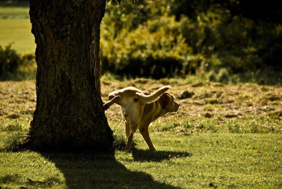 В Испании штрафы для владельцев собак, которые не убирают за питомцами на улице, могут возрасти до 73 тысяч рублей | CityTraffic