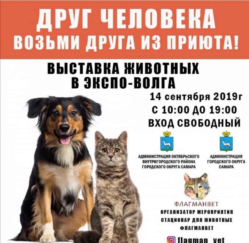 Самарцам бесплатно раздадут кошек и собак | CityTraffic