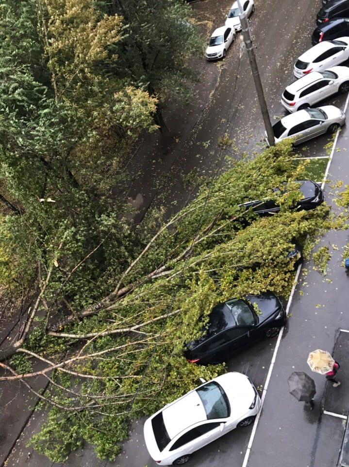 В Самаре ветром повалило дерево, которое повредило контактные линии трамваев, транспорт встал | CityTraffic