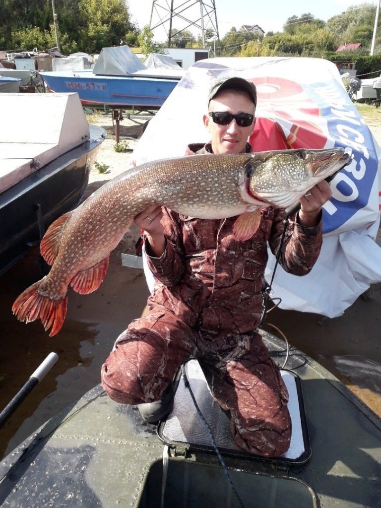Рыбак из Самарской области поймал гигантских судака и щуку | CityTraffic