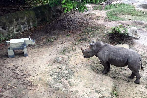 Белого носорога повергла в ужас его картонная копия: видео | CityTraffic