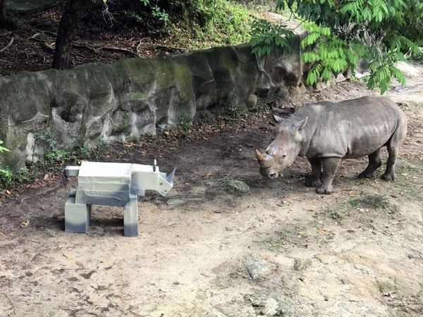 Белого носорога повергла в ужас его картонная копия: видео   CityTraffic