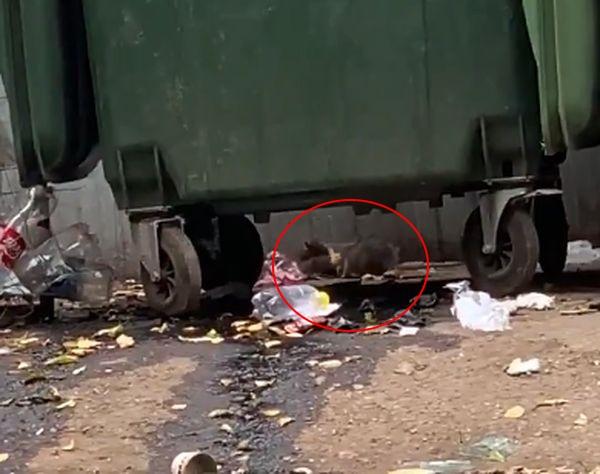 В Самаре начали травить грызунов на пляжах и скверах, но больше всего их на городских помойках: видео | CityTraffic