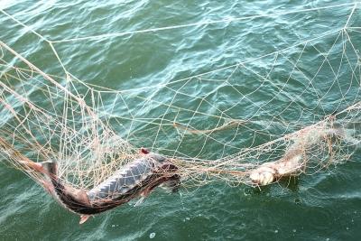 За незаконный вылов рыбы житель Самары может лишиться свободы на срок до 5 лет | CityTraffic