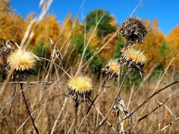 В Самарской области за 9 месяцев нашли 842 га земель сельхозназначения, заросших сорняками | CityTraffic