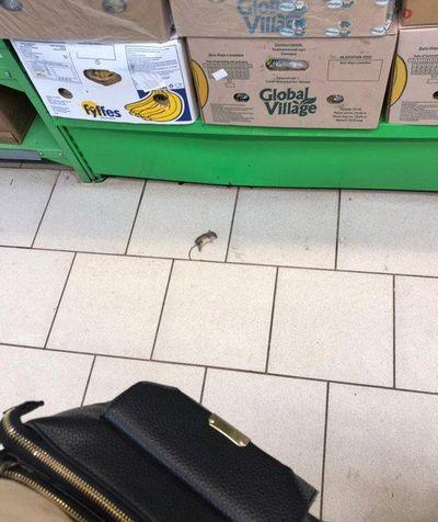 Жители Самары обнаружили дохлую мышь в супермаркете | CityTraffic