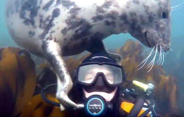 Тюлень играет с дайвером, пытаясь обнять его: видео | CityTraffic