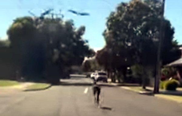 Кенгуру со всех ног удирает от нападающих на него сорок прямо по автомобильной дороге: видео | CityTraffic