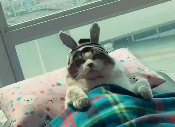Кошка по имени Водка проснулась и обнаружила, что у нее кроличьи уши: видео | CityTraffic