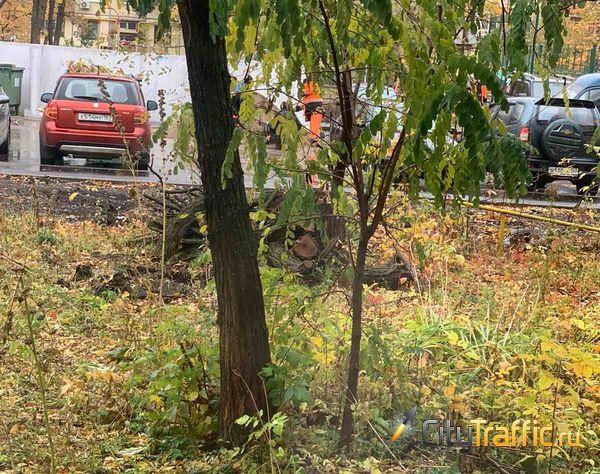 В Самарской области регоператора по вывозу ТКО хотят заставить убирать сучья и листья | CityTraffic
