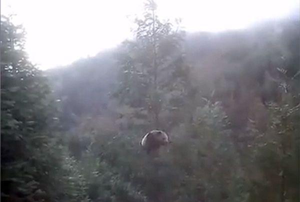 Гигантская панда повисла на огромном дереве, чтобы вздремнуть: видео | CityTraffic