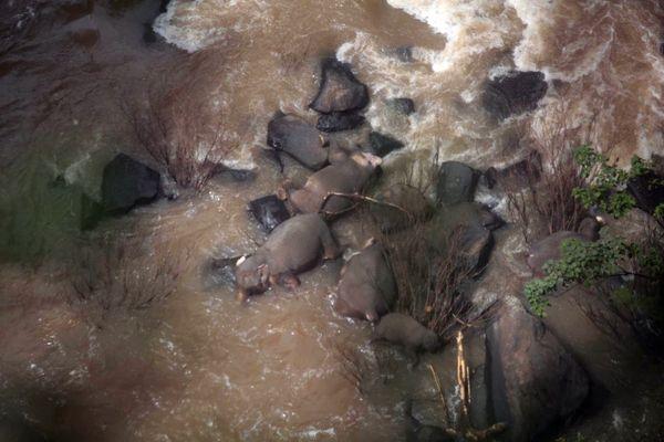 Пять слонов пожертвовали жизнью напрасно, спасая маленького слоненка: видео | CityTraffic