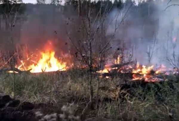 В Тольятти продолжает гореть лес, требуются добровольцы: видео   CityTraffic