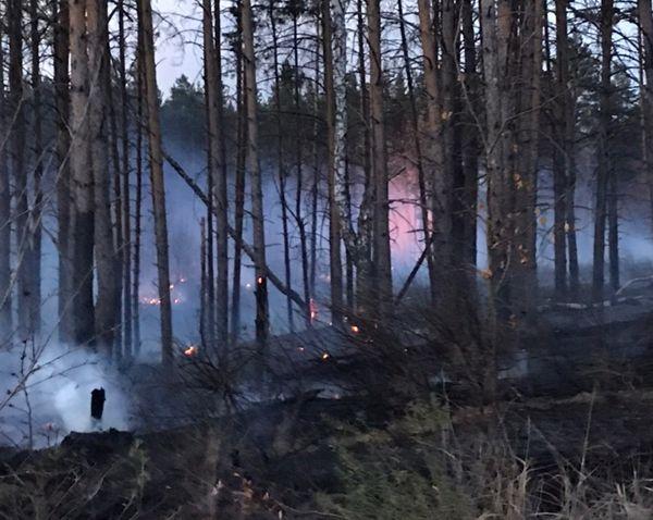 В Тольятти локализовали лесной пожар в 15 квартале городского лесничества   CityTraffic