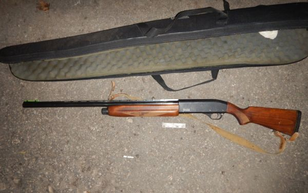 В Самарской области браконьер застрелил лося  и может заплатить за это полмиллиона рублей | CityTraffic