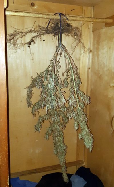 У селянина из Самарской области изъяли марихуану и револьвер   CityTraffic