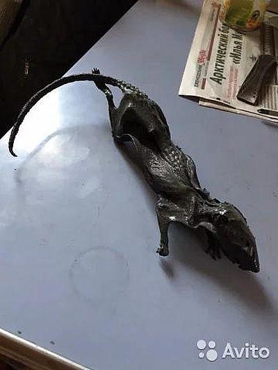 В Самаре продают мумию черной крысы для обрядов колдунов | CityTraffic