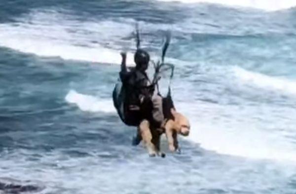 Человек посадил с собой на параплан собаку и отправился в полет над океаном: видео | CityTraffic