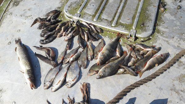 Более 10 тонн рыбы изъяли у браконьеров полицейские Самарской области | CityTraffic