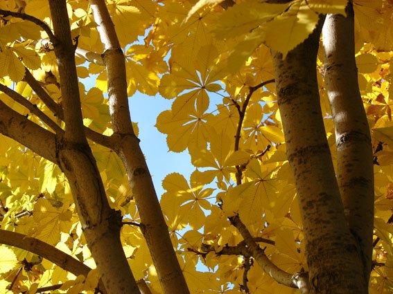 Галерея «Меандр» представляет художественную выставку «Осеннее настроение»