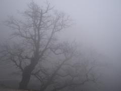 В Тольятти ожидается туман