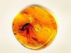 Открывается выставка «Доисторические насекомые вянтаре»