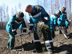 Руководство Тольяттикаучука приняло участие впосадке 1га леса