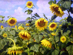 Выставка «Краски лета» откроется завтра вТольяттинском художественном музее