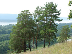 Для борьбы спожарами втольяттинском лесу появились специальные водоемы