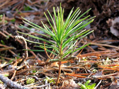 В Тольятти продолжаются работы по уборке ипосадке нового леса