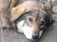 В Тольятти продолжает обострятся проблема бездомных животных | CityTraffic