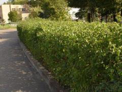 6 школ Тольятти получат средства на озеленение от СИБУРа