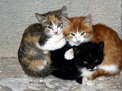 28 октября состоится выставка-раздача питомцев приютов для бездомных животных